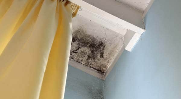 Mold Mangement Services | NY