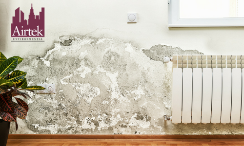 Mold Inspection New York | Mold Inspection NYC | Airtek Environment